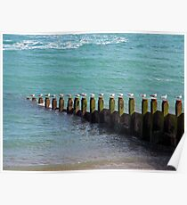 """Seventeen Seagulls . . Standing on the Groyne"" Poster"