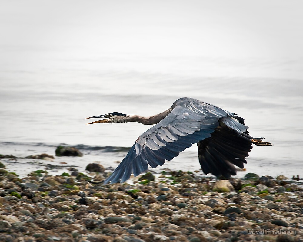 Blue Spectre on the Beach by David Friederich