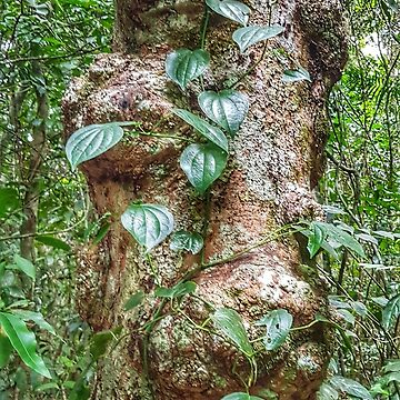 Rainforest creeper  by Bellamaree