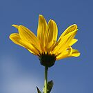 Yellow by MDossat