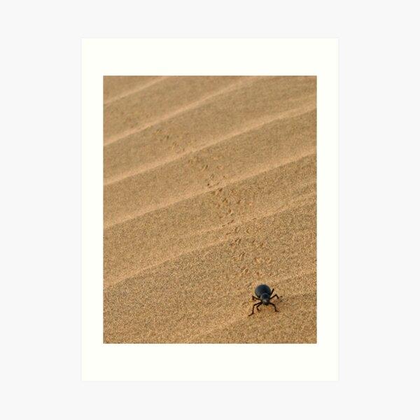 Dung Beetle, Thar Desert, Rajasthan, India Art Print