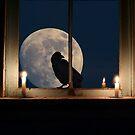 A full moon night with raven by Istvan Hernadi