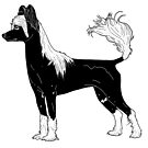 Chinese Crested Dog by aheadgraphics