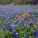 Spring in Texas by Susan Russell