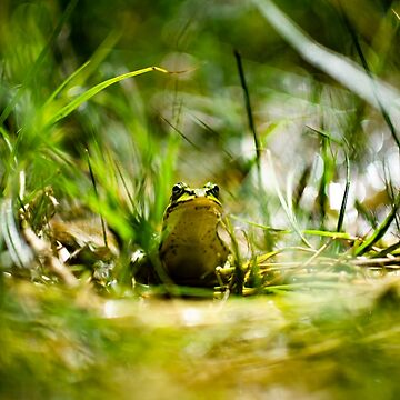 Frogger by arc1