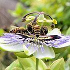 Breakfast Party for Bees......Lyme Regis. Dorset UK by lynn carter