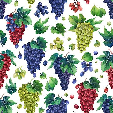Watercolor bunches of white, blue and red grapes by Glazkova