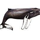 «La famosa muesca de ballenas jorobadas de Cabo Verde» de Chloé Yzoard