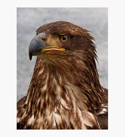 Eagle Portrait Photographic Print