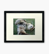 Scuffle with the Paparazzi Framed Print