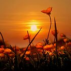 buttercup sunlight by Withinlandscape Phil Child
