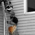 Cats by PgPphotography