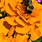 Bee Orange Flower by Graphxpro