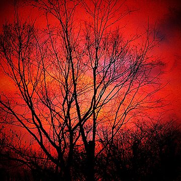 (Red morning) Illusion helps to keep them sane   by jammingene