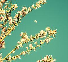 Half Moon Spring by RichCaspian