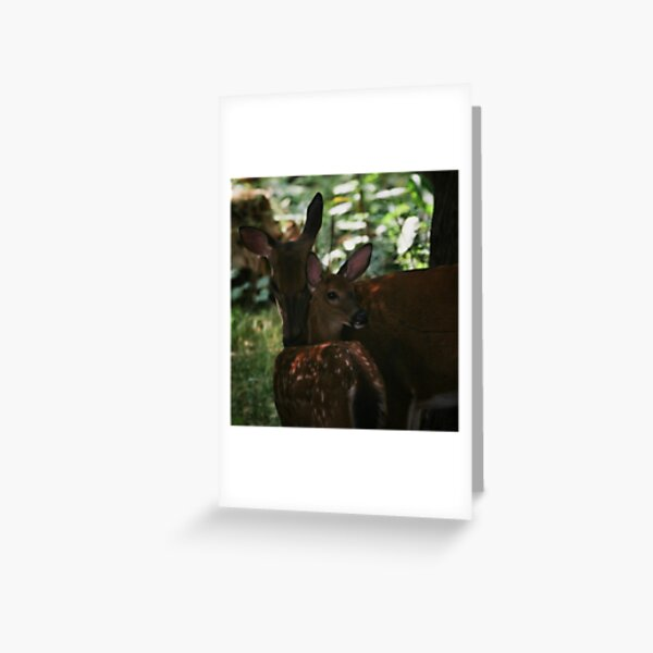 Mother and Fawn Greeting Card