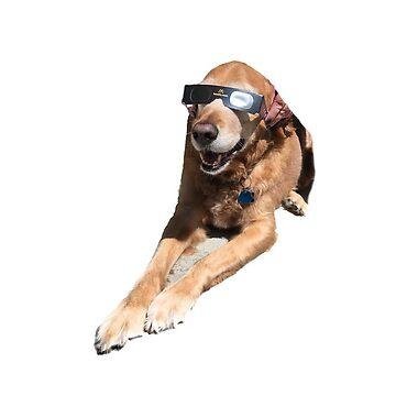 El perro de Emily de laurajoy16