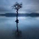 the milarrochy tree by codaimages