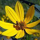 Beauty in Yellow by debbiedoda