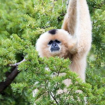 Cincinnati Zoo by pieperview