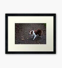 Grizz the collie Framed Print