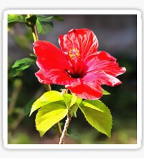 Beautiful Red Tropical Hibiscus Flower Sticker