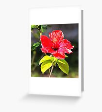 Beautiful Red Tropical Hibiscus Flower Greeting Card