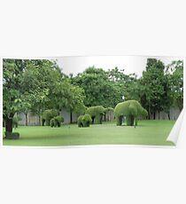 green chang Poster