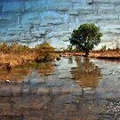 Stream Crossing by Barbara Manis