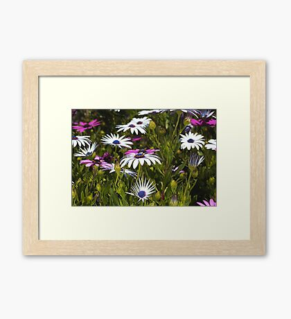 Daisies Under My Feet Framed Print
