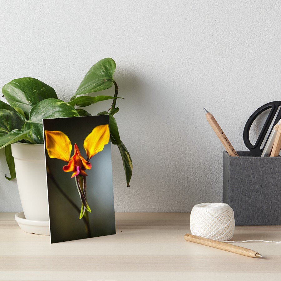 Pansy Orchid Art Board Print