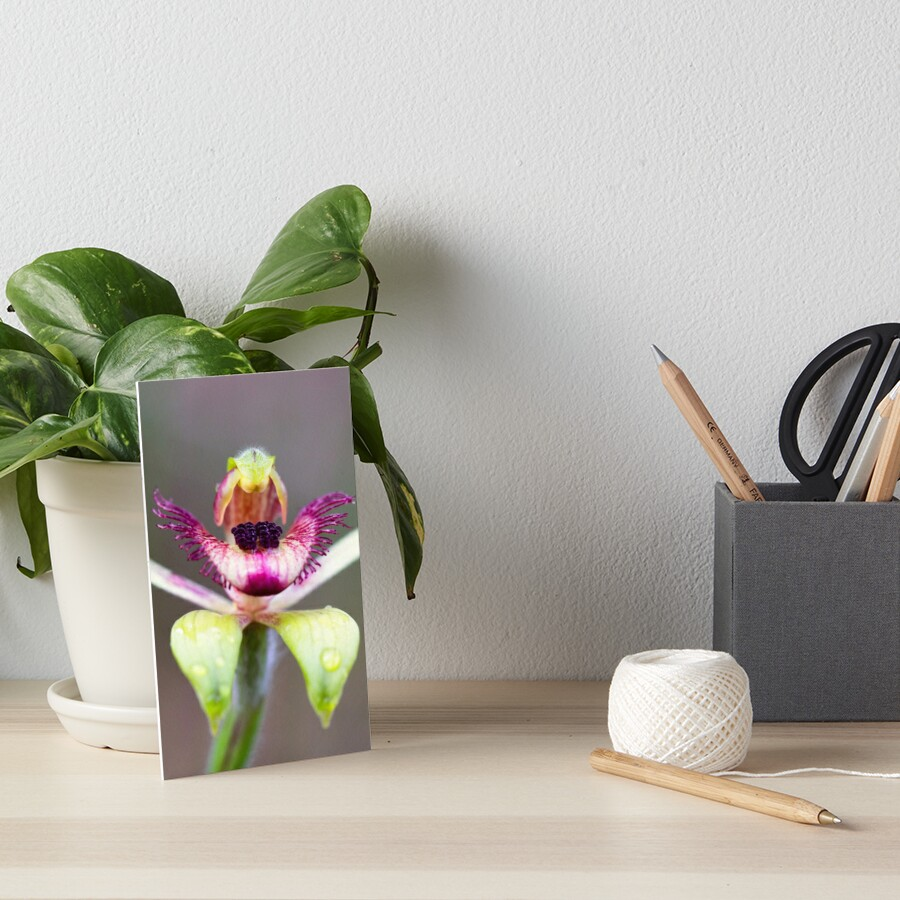 Dancing Spider Orchid Art Board Print