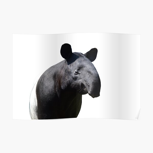 The Most Handsome Tapir in the World Poster