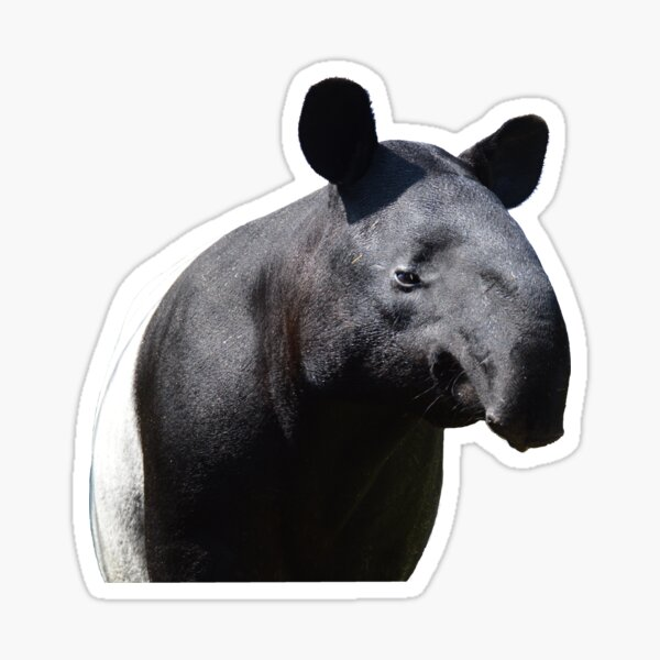 The Most Handsome Tapir in the World Sticker
