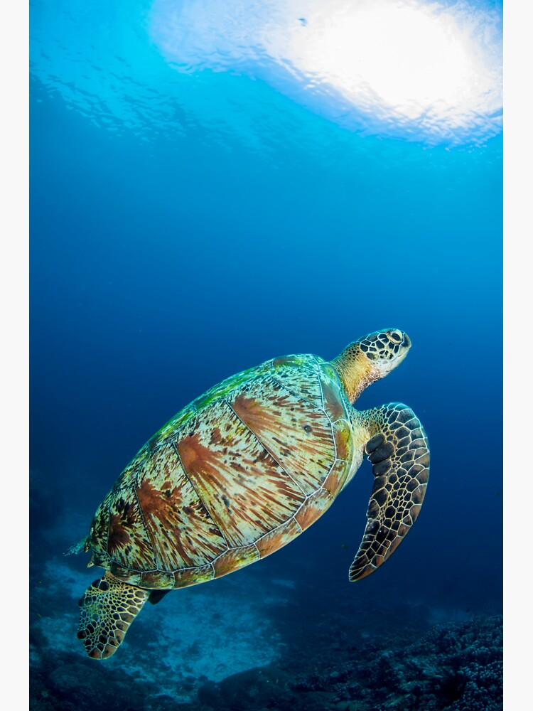Turtle perfection by DavidWachenfeld
