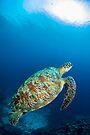 Turtle perfection by David Wachenfeld