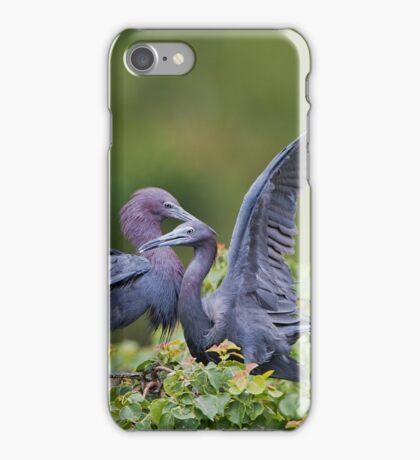 Little Blue Herons  iPhone Case/Skin