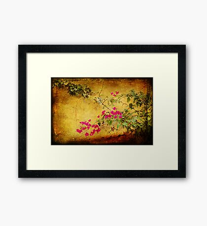Golden wall with bougainvillea Framed Print