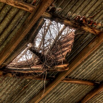 The Study of an old farm shed 3 - Experienced in HDR by scatrdjason