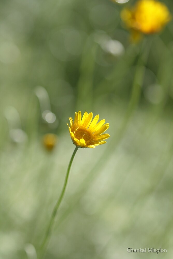 Spring dreams by Chantal Misplon
