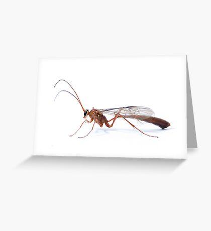 Parasitic Wasp Greeting Card