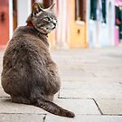 Cat by ansaharju