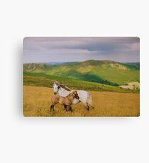 Lienzo Dartmoor: Ponies on Hameldown