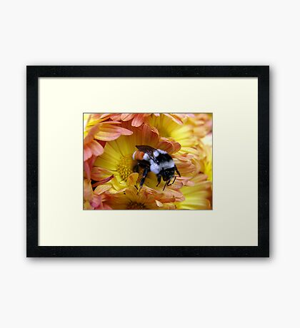 Color Coordinated Bumble Framed Print