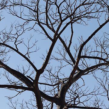 Tree Silhouette by Shendz