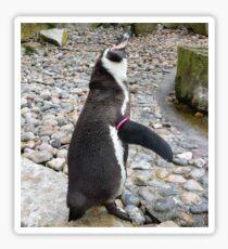 Humboldt Penguin Sticker