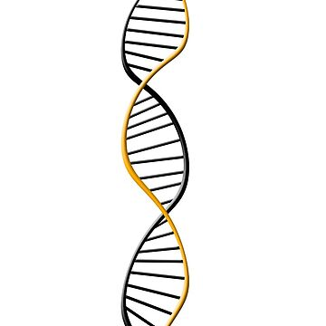 DNA strand by Cocotteetloulou