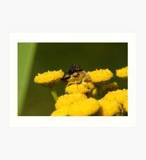 TWO Jagged Ambush Bugs Art Print