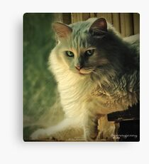 I'm only a cat Canvas Print
