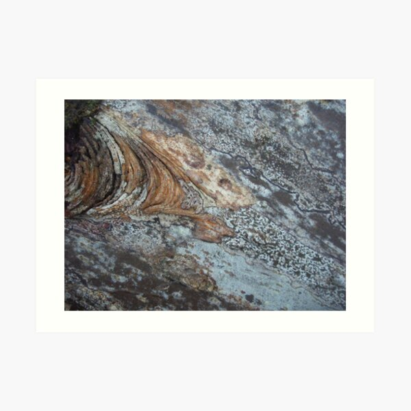 melting bark Art Print